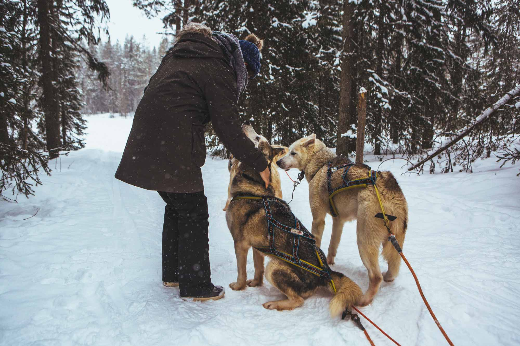 Lapland vacation tips - Korvala huskies