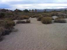 Coachella Valley Preserve walk