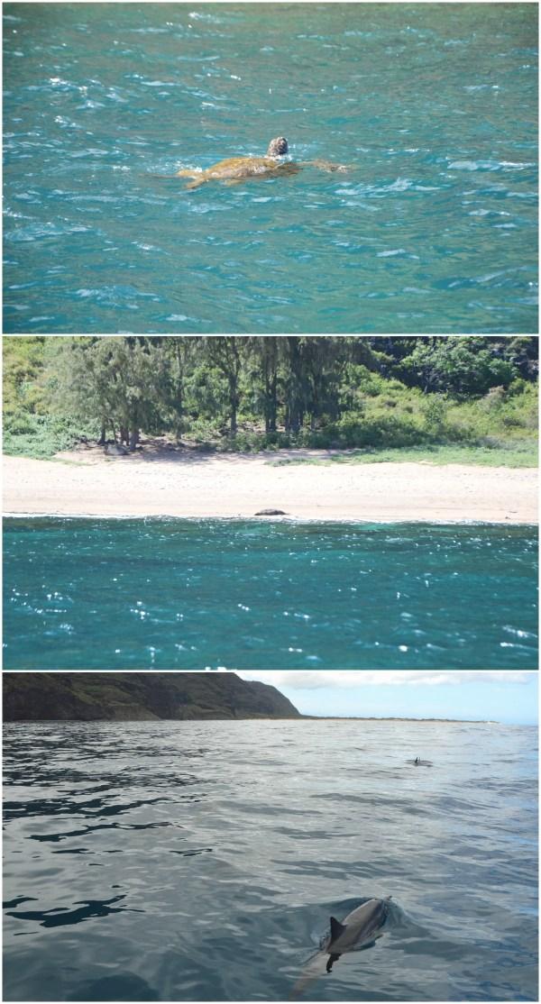 Kauai Na Pali Coast Snorkeling