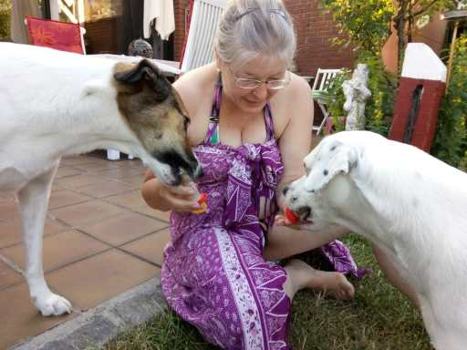 Fütterung von Zina und Feli mit Hundeeis