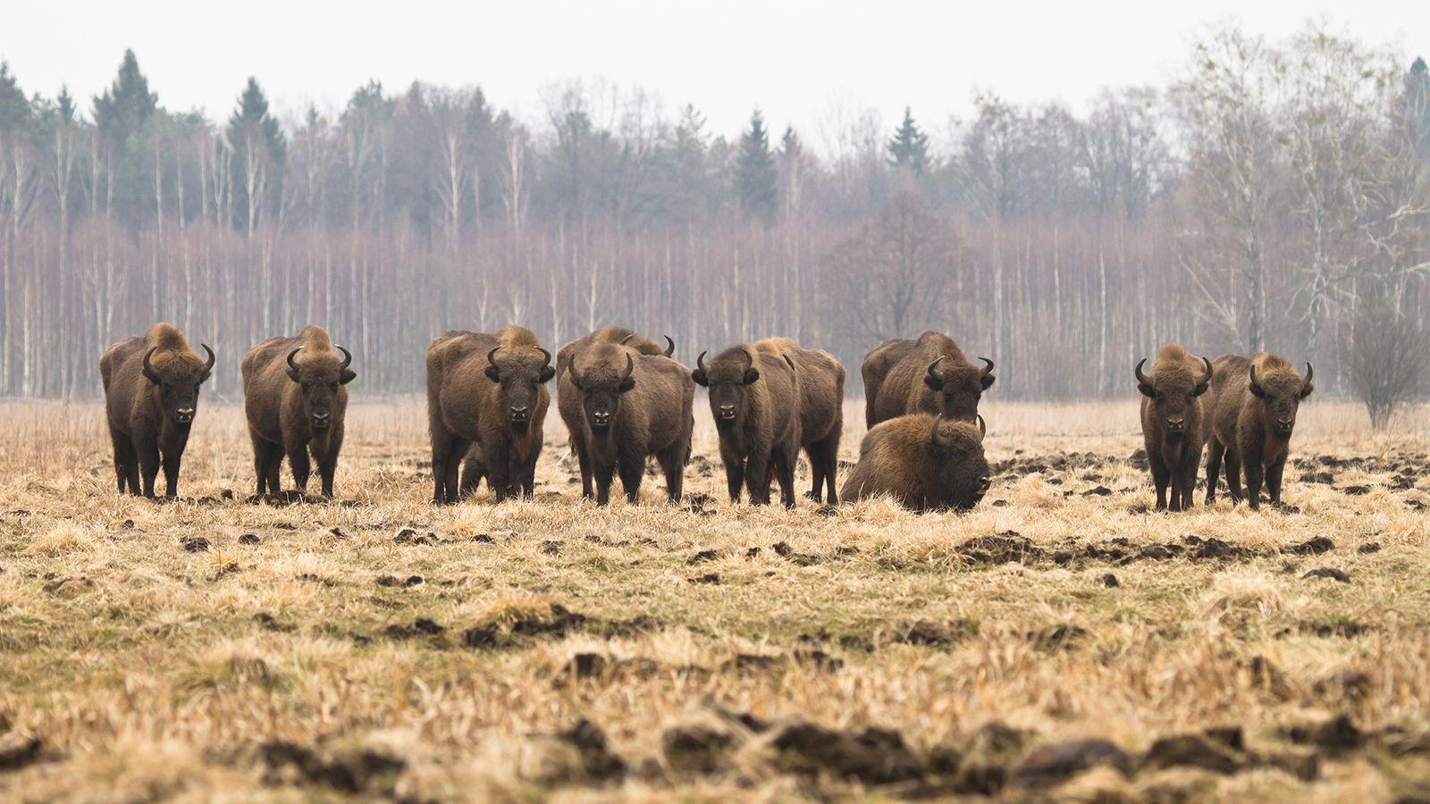 A Tale Of Two Elephants Worksheet