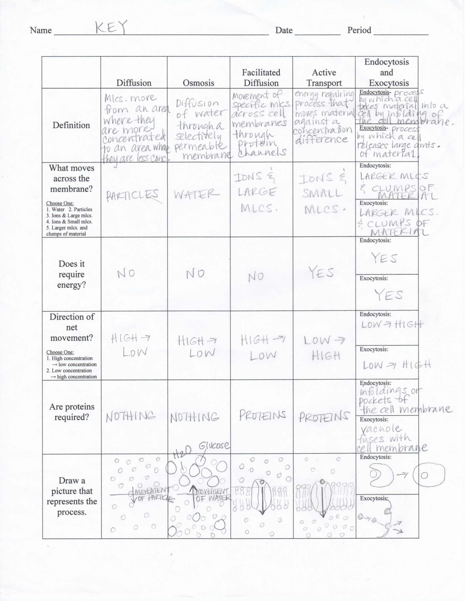 Active And Passive Transport Worksheet Answers