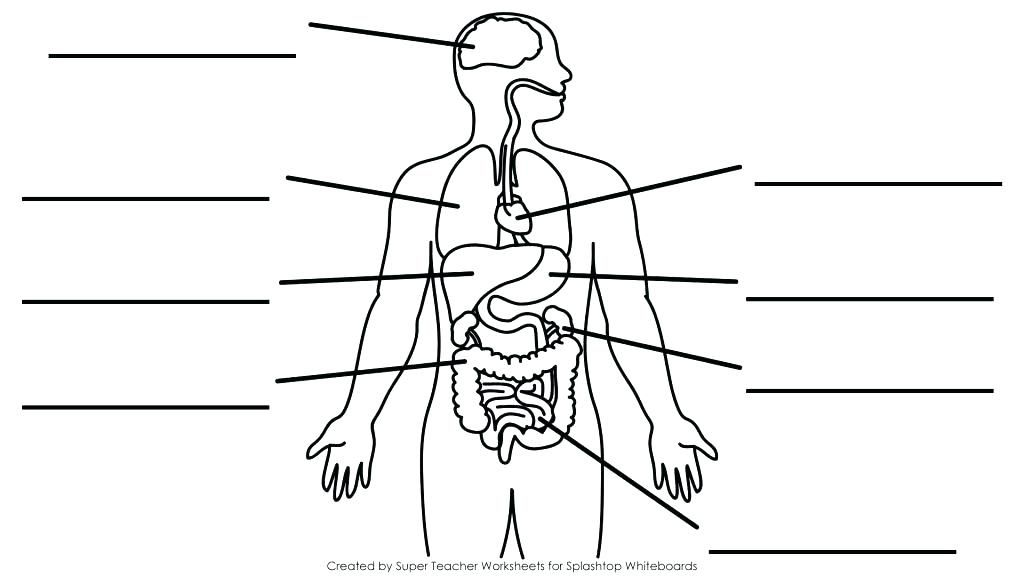 Anatomy and Physiology Worksheets for College