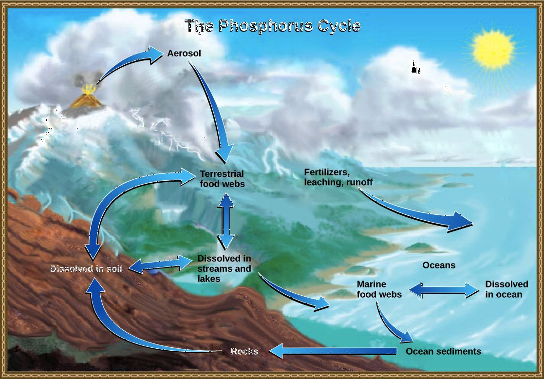 Biogeochemical Cycles Worksheet Answer Key