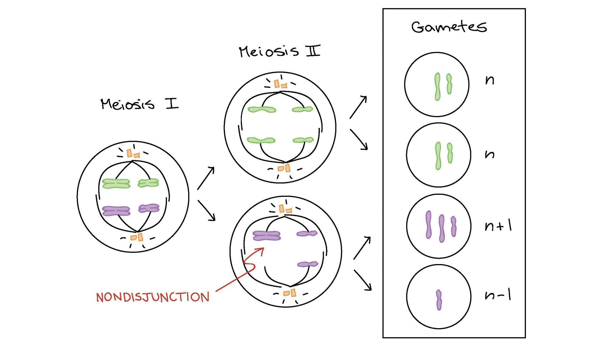 Biomolecules Worksheet Answers