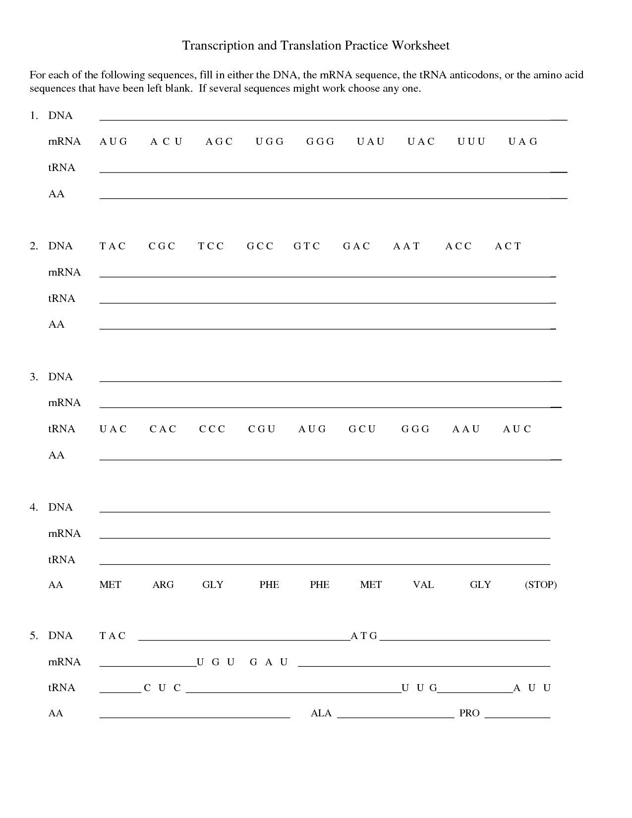 Cell Cycle And Dna Replication Practice Worksheet Key