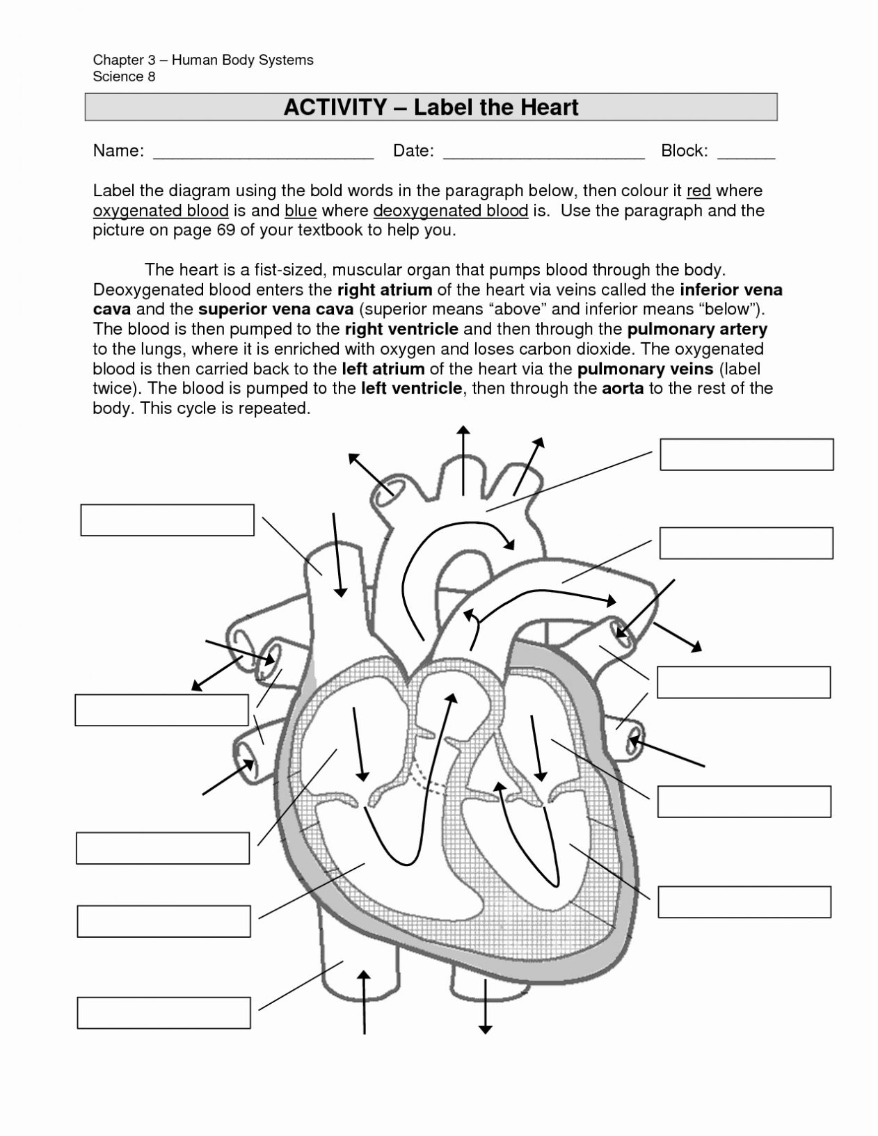 The Circulatory System Worksheet Answers
