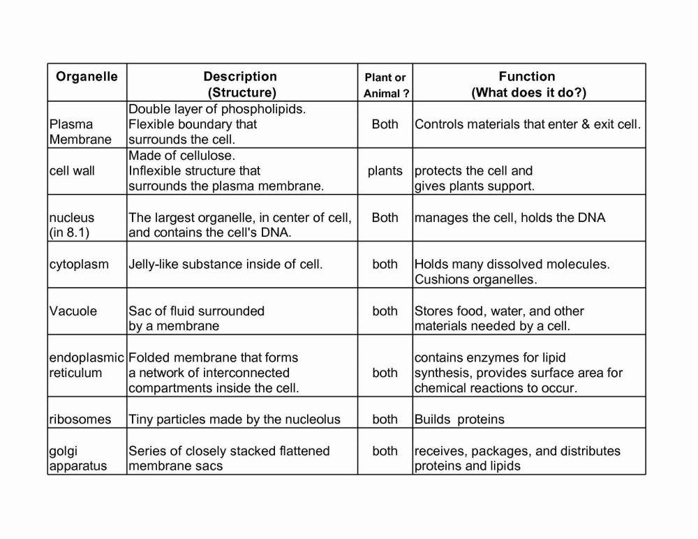 medium resolution of 28 Biology Cell Organelles Worksheet - Worksheet Resource Plans