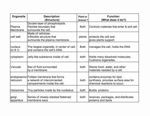 small resolution of 28 Biology Cell Organelles Worksheet - Worksheet Resource Plans