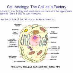 3d Animal Cell Coloring Diagram How To Make Sun Path Cells Alive Plant Worksheet Answer Key Briefencounters Lovely Cellsalive Image Collections For Kids