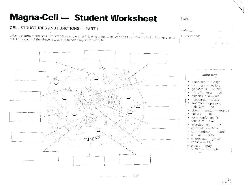 Cellular Transport and the Cell Cycle Worksheet