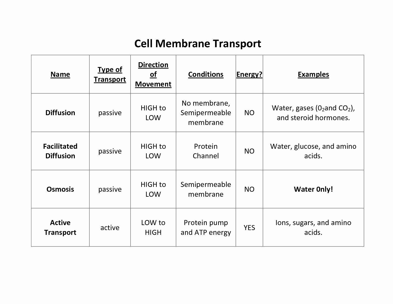 Cellular Transport Review Worksheet Answer Key