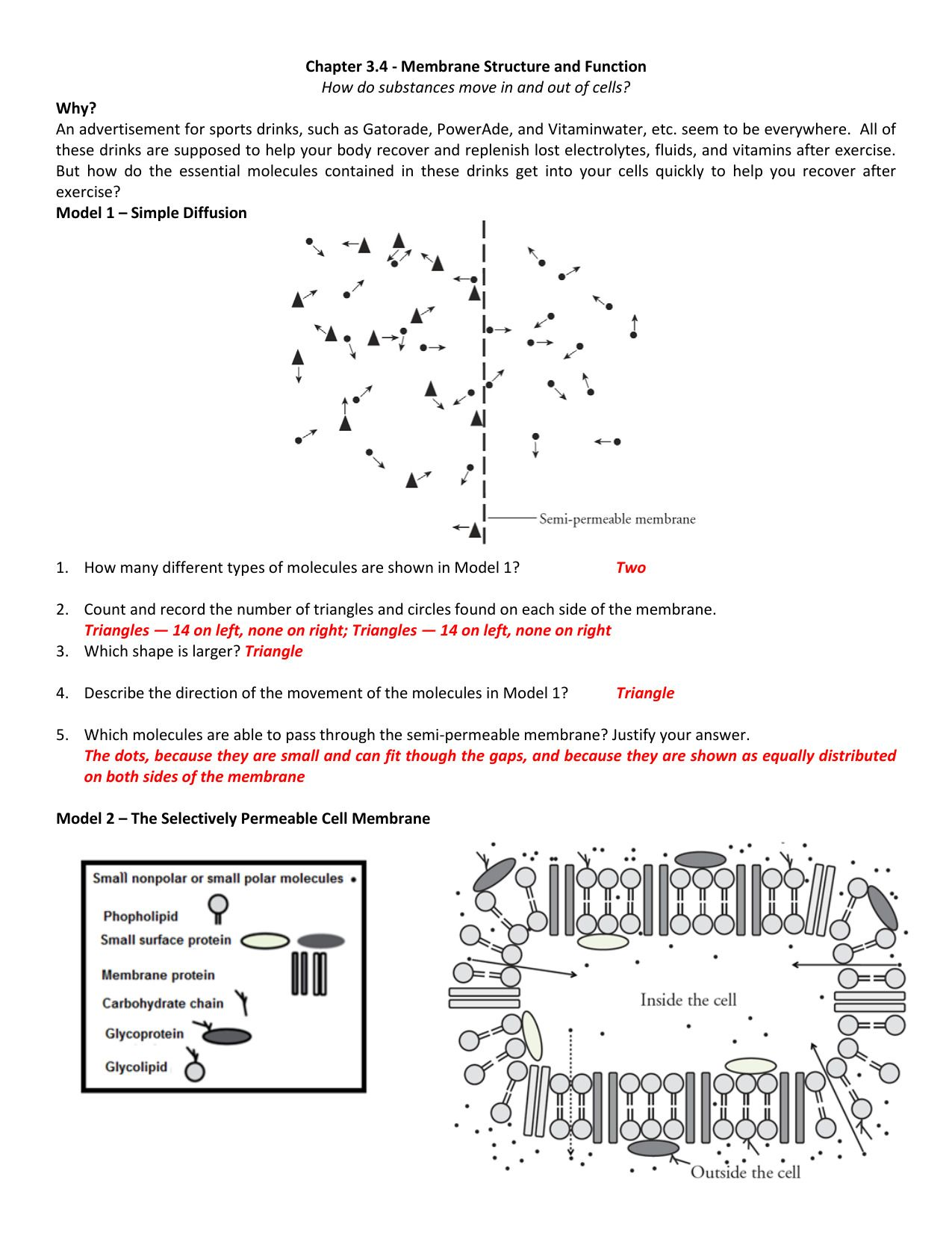 Diffusion Worksheet With Answers