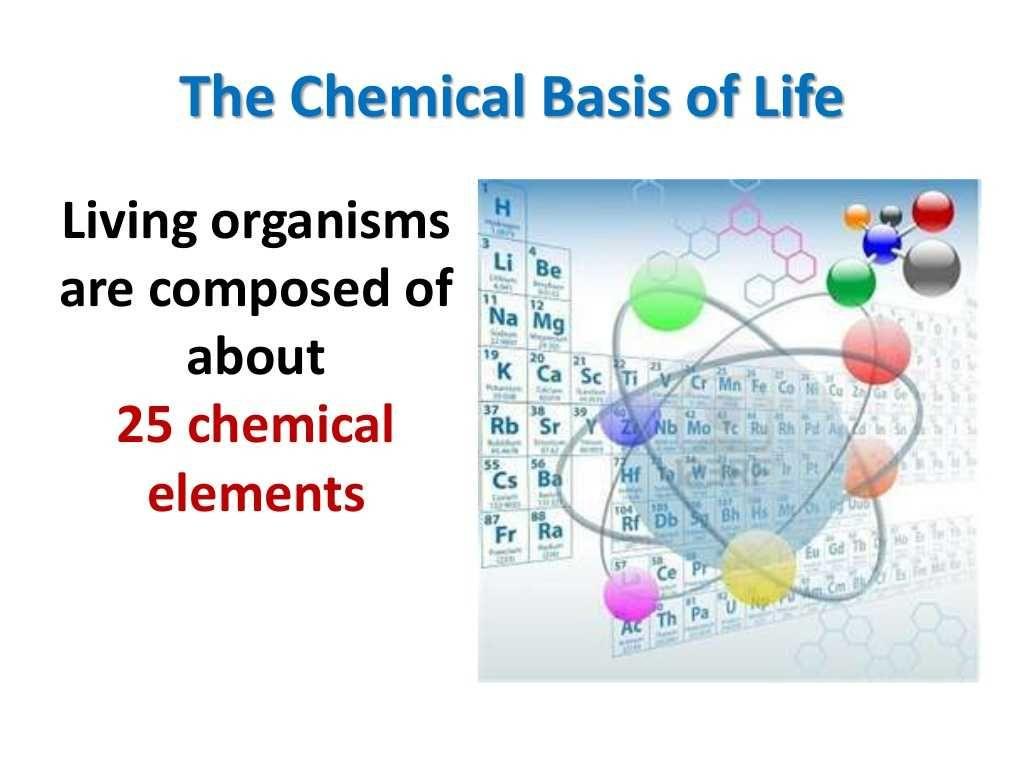 Energy Transfer In Living Organisms Worksheet