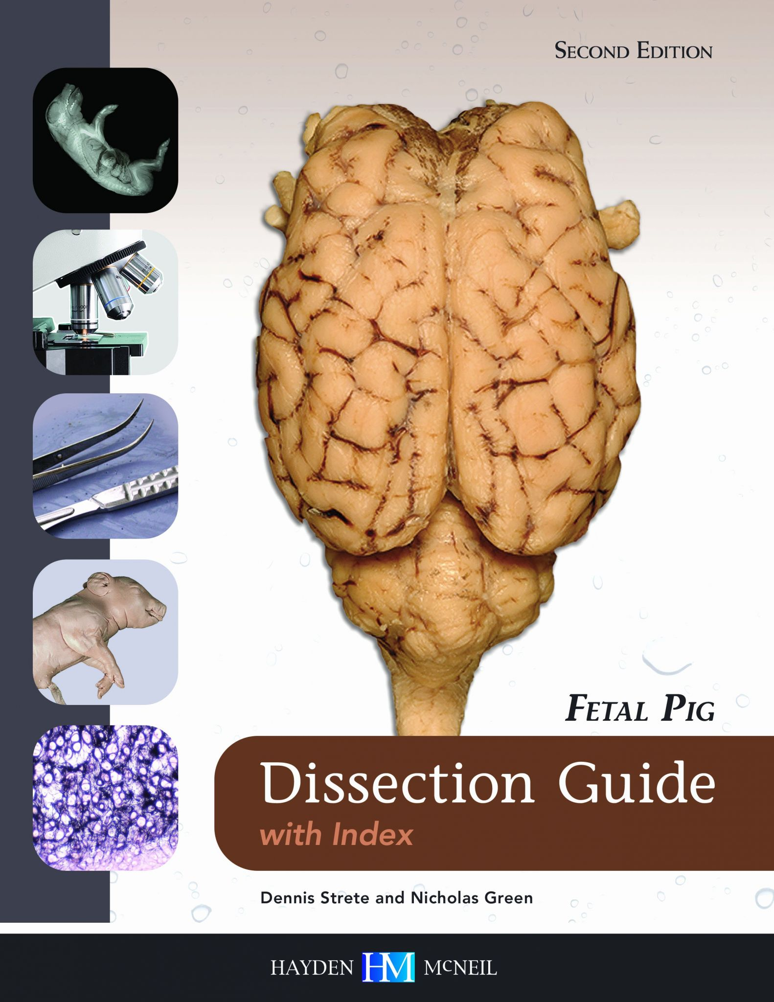 Fetal Pig Dissection Worksheet Answer Key