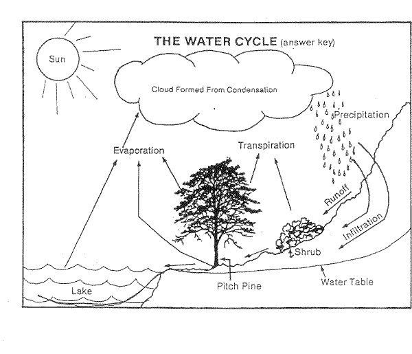 water cycle diagram blank 1998 honda accord headlight wiring fill in the worksheet briefencounters carbon 9 best label
