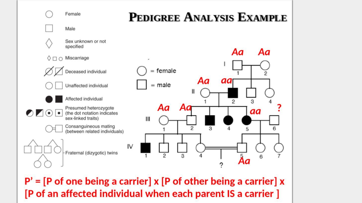 Genetics Pedigree Worksheet