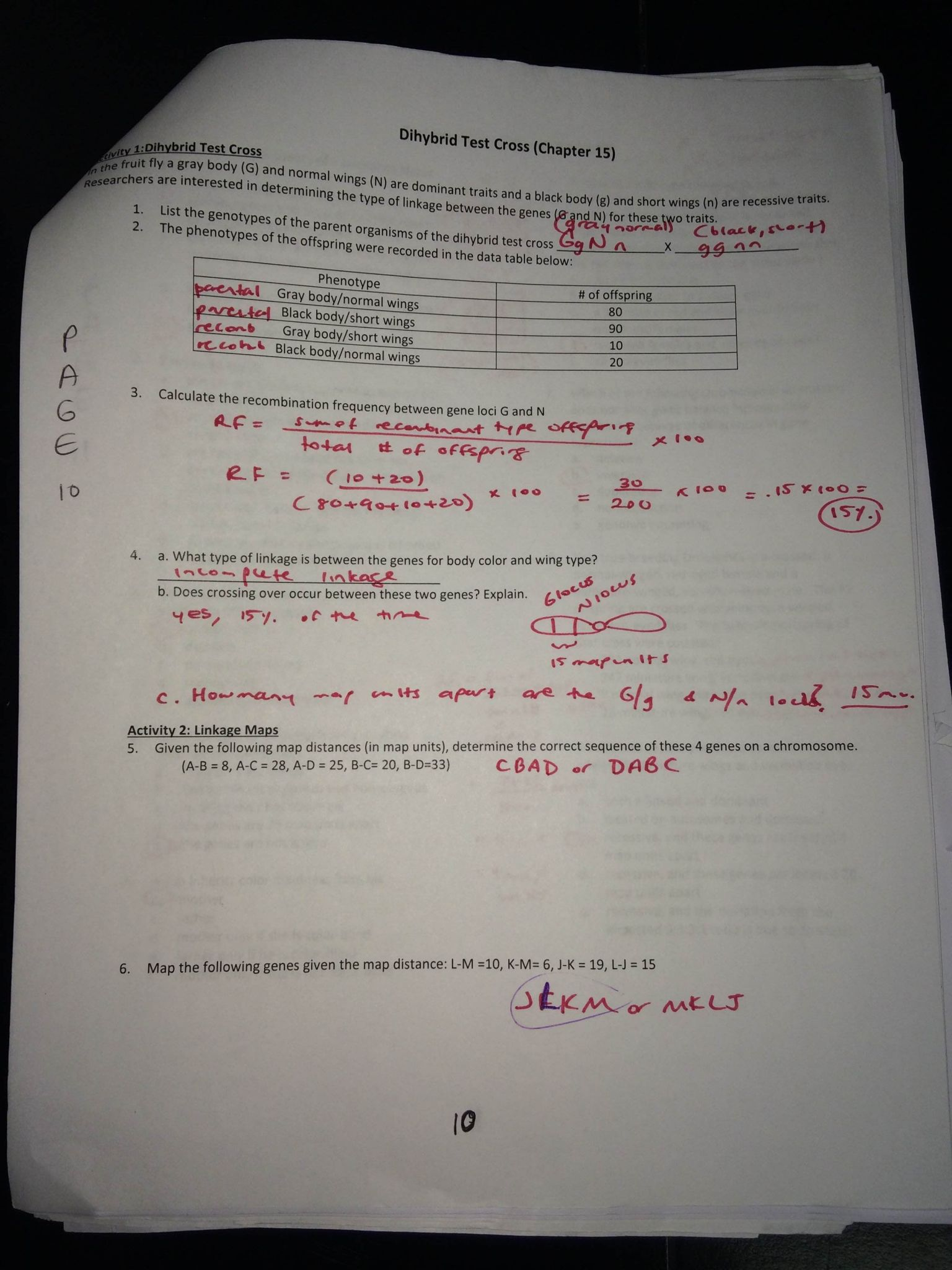Genetics Practice Problems Worksheet Answers