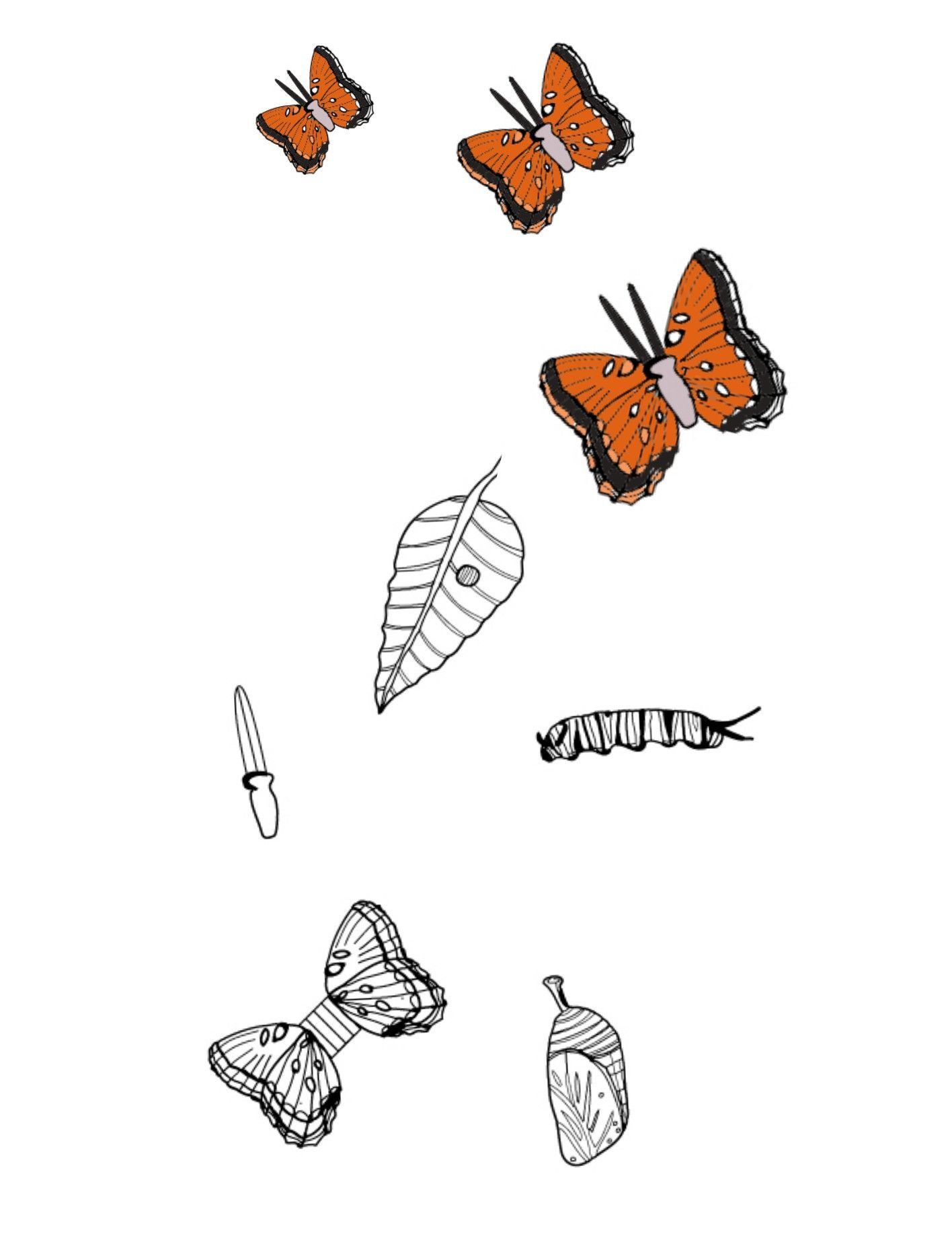 Monarch Butterfly Worksheets