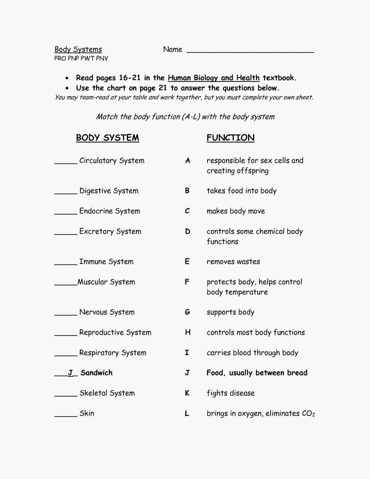 Human Digestive System Worksheet High School