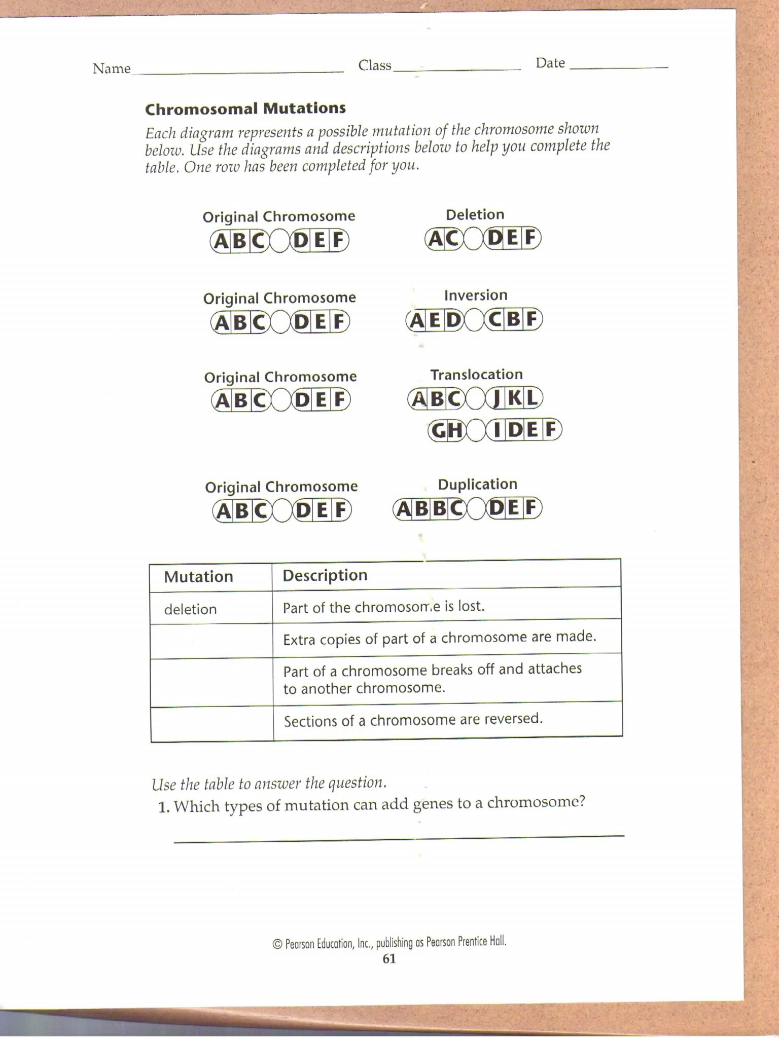 Mutations Worksheet Answers