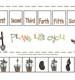 Life Cycles Worksheets Third Grade   Printable Worksheets and Activities  for Teachers [ 1236 x 1600 Pixel ]