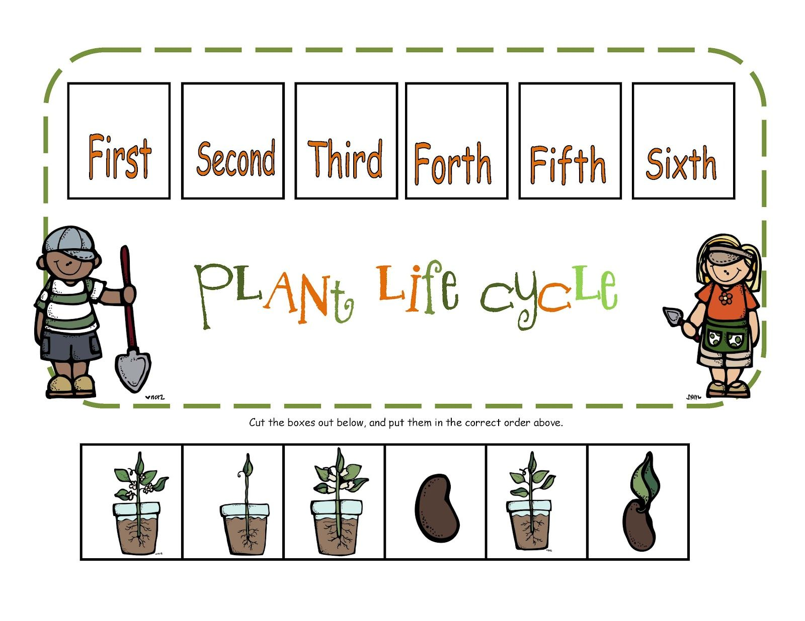 hight resolution of Life Cycles Worksheets Third Grade   Printable Worksheets and Activities  for Teachers