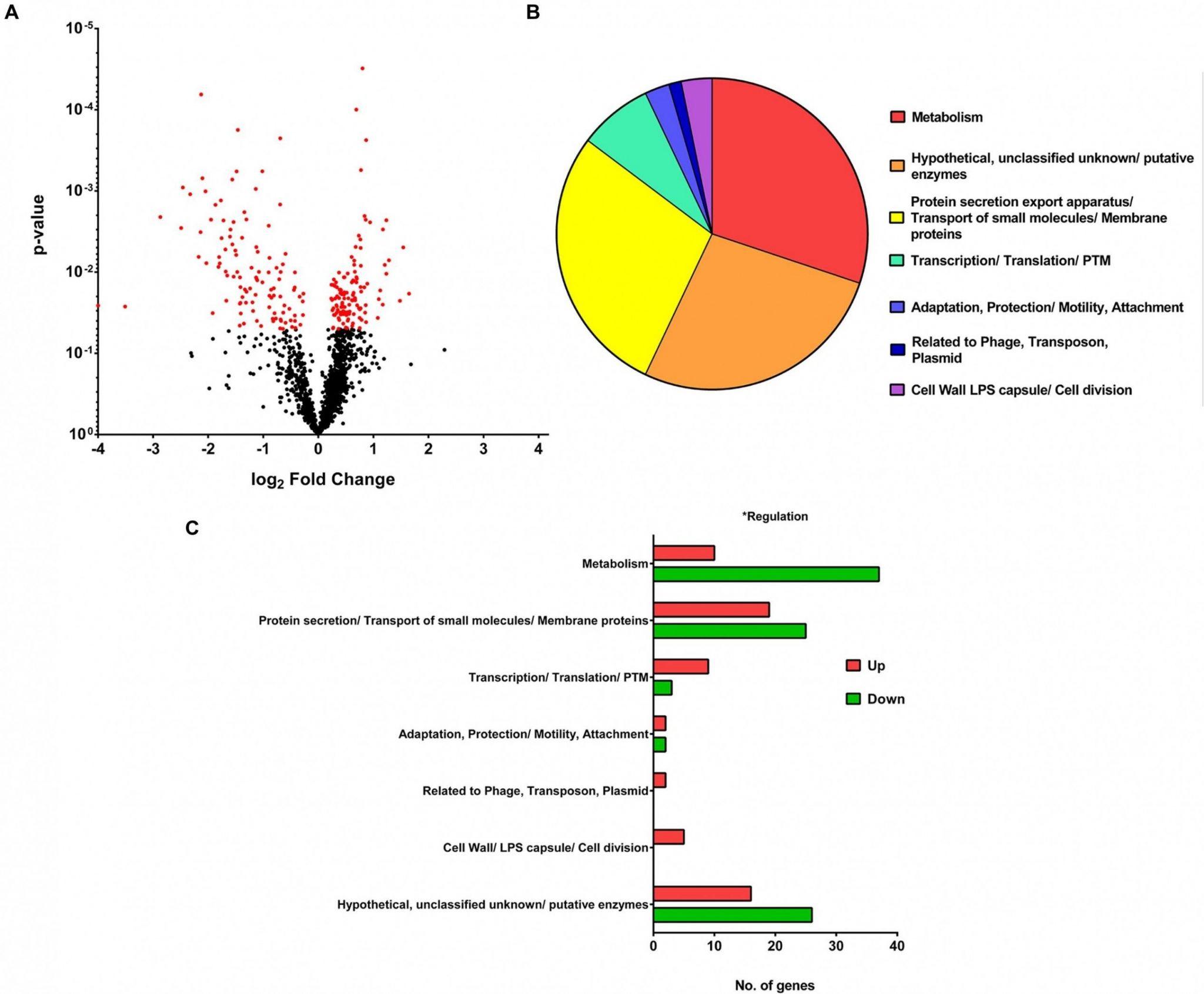 Prokaryotic And Eukaryotic Cells Worksheet Answers