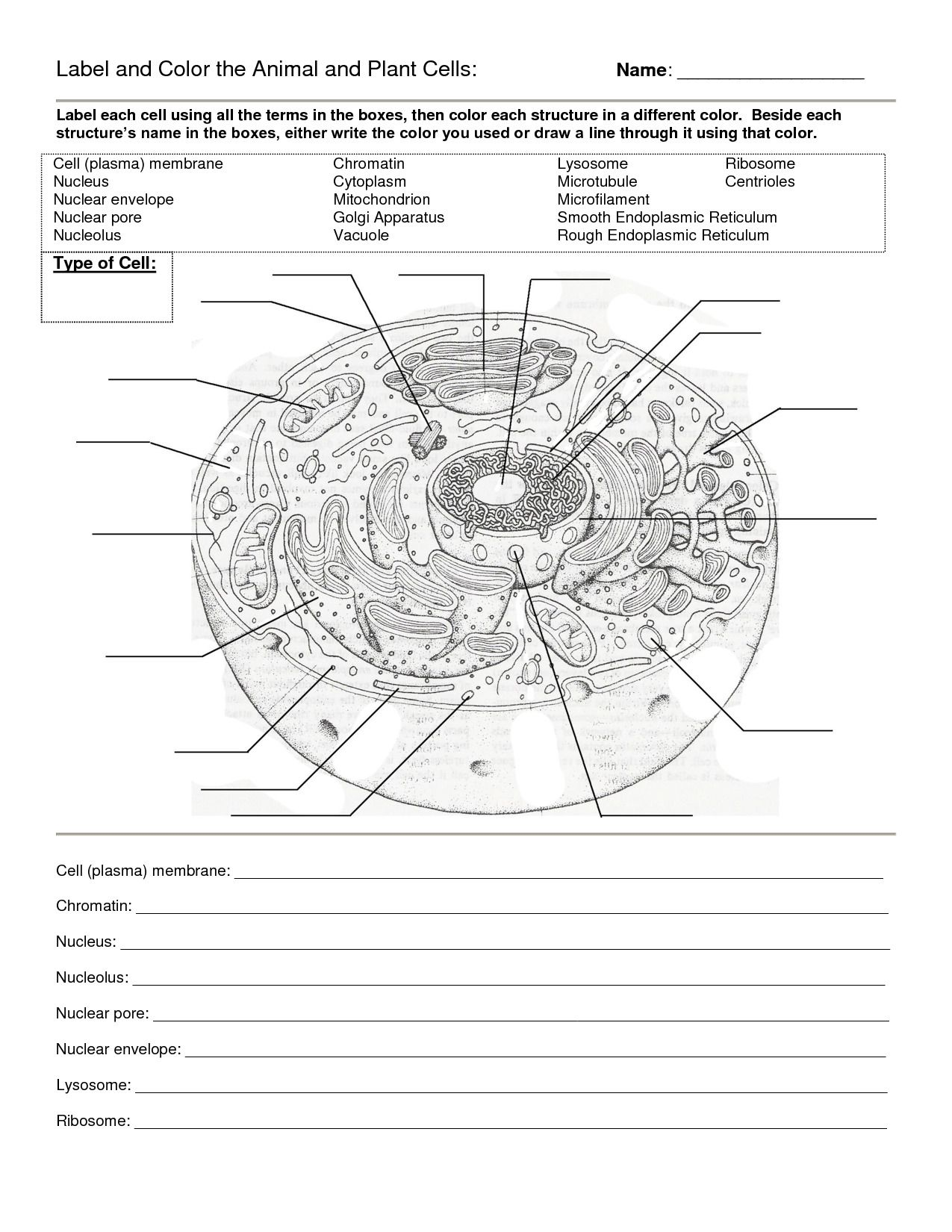 Prokaryotic And Eukaryotic Cells Worksheet