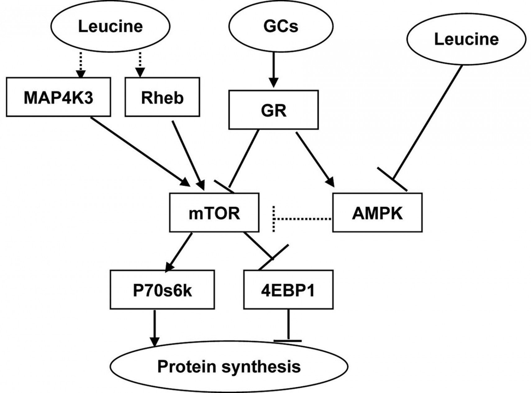 Protein Synthesis Worksheet Key