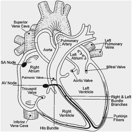 Respiratory System Medical Terminology Worksheet