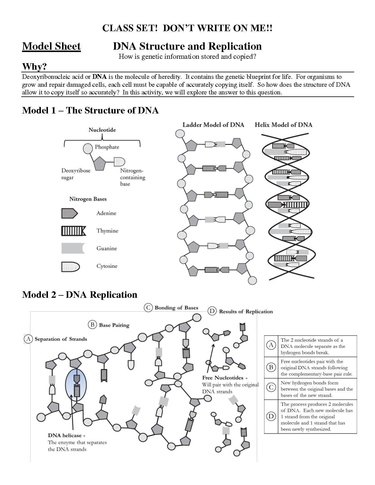 Structure Of Dna And Replication Worksheet Answers