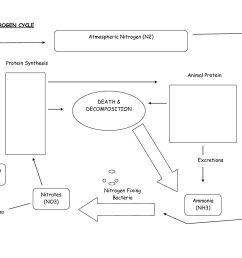 worksheet carbon cycle worksheet high school nitrogen cycle worksheet high school best free printable worksheets [ 1650 x 1275 Pixel ]