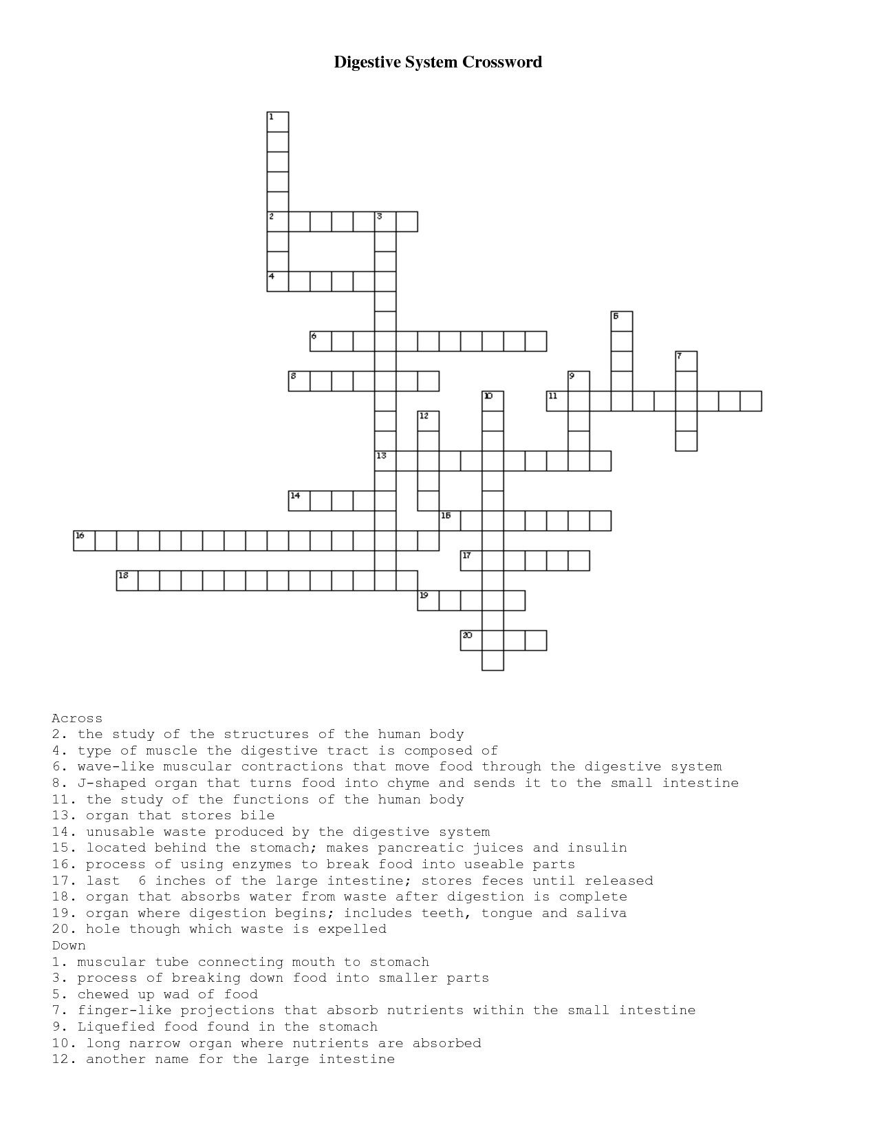Digestive System Diagram Crossword Answer Key