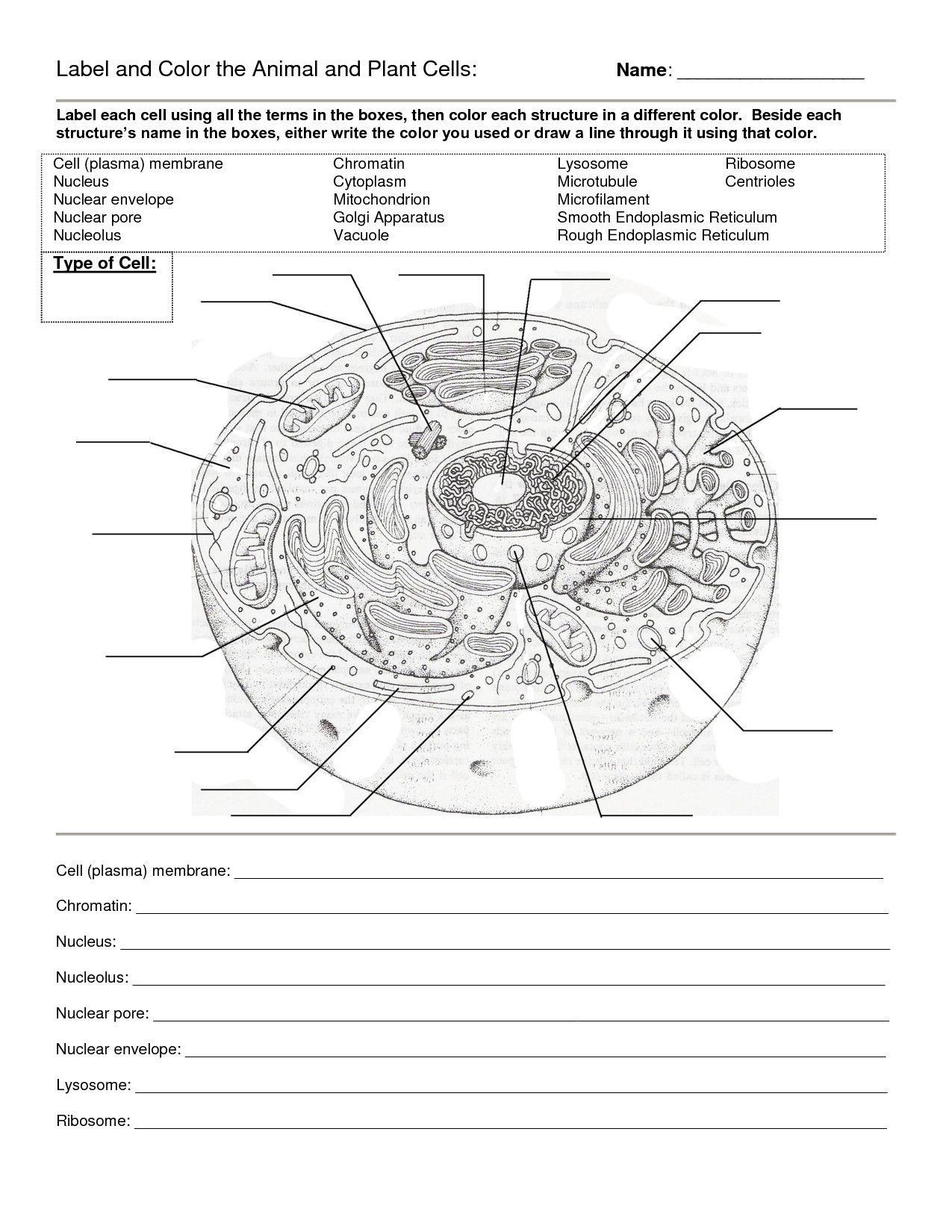 Transport Across Membranes Worksheet Answers