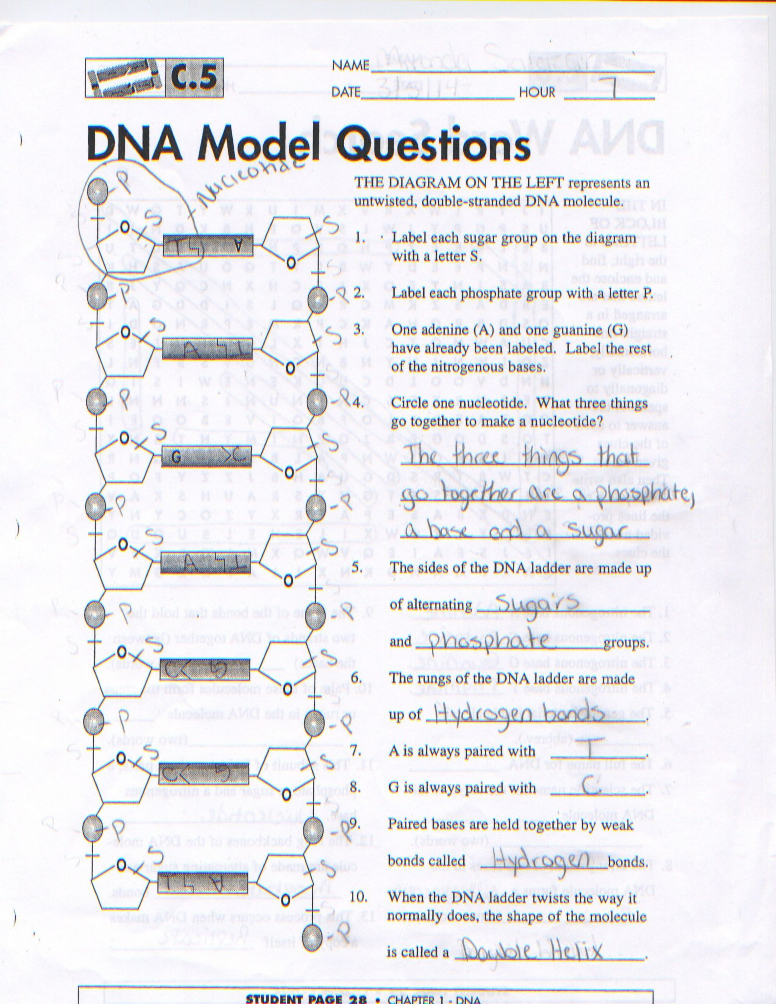 Virtual Lab Dna And Genes Worksheet