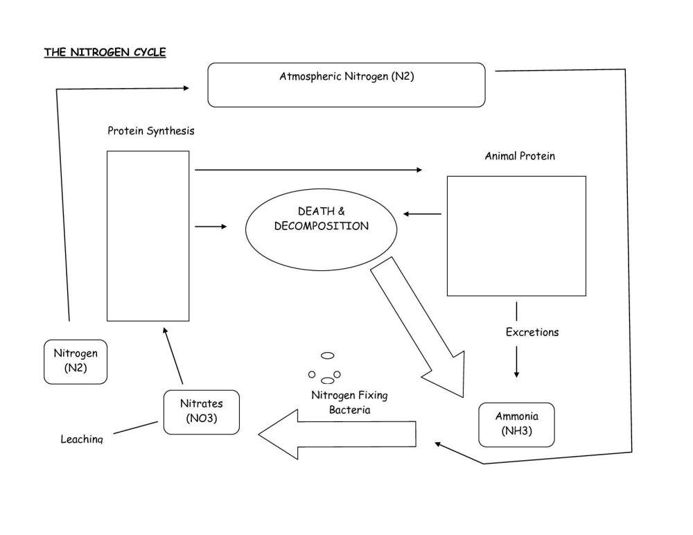 medium resolution of carbon nitrogen cycle diagram blank custom wiring diagram