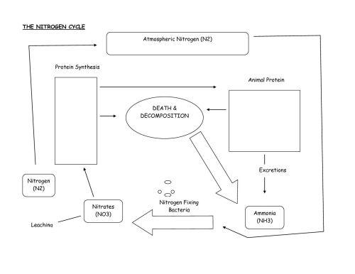 small resolution of carbon nitrogen cycle diagram blank custom wiring diagram