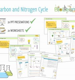 water carbon and nitrogen cycle worksheet answers nitrogen cycle diagram worksheet inspirationa 4x carbon and nitrogen [ 1602 x 1200 Pixel ]