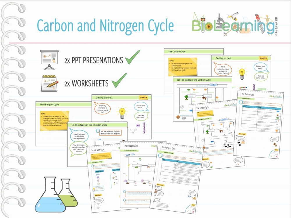 medium resolution of water carbon and nitrogen cycle worksheet answers nitrogen cycle diagram worksheet inspirationa 4x carbon and nitrogen