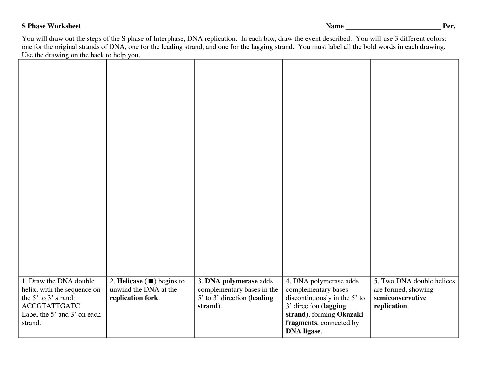 Worksheet On Dna Rna And Protein Synthesis Answer Key Quizlet