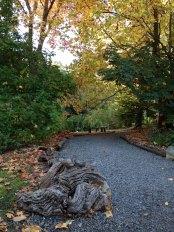 Woodland path to reception