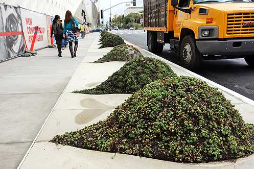 New planter mounds have been planted along Grand Ave along the side of The Broad