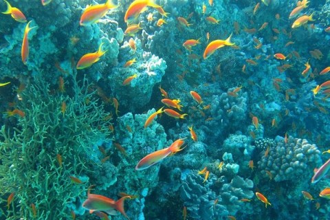 A new approach to ocean policy is crucial for a just transition