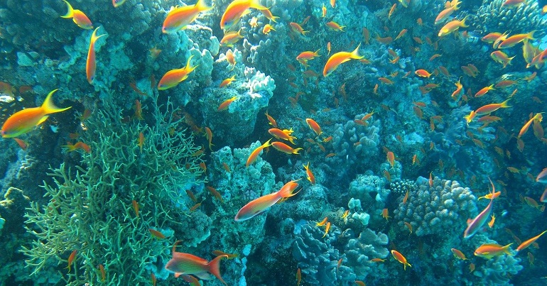 A photo of an ocean bed with orange fish