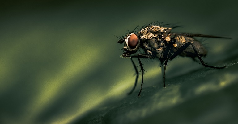 A photo of a fly