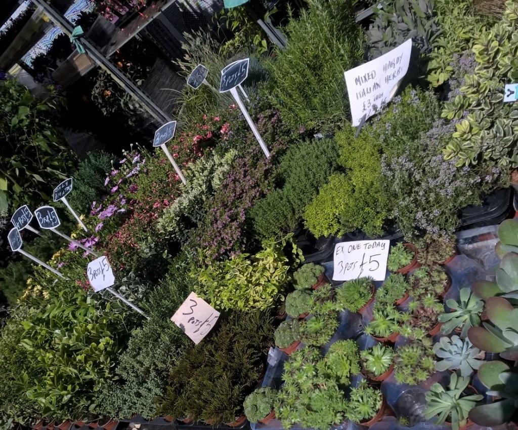 columbia road succulents