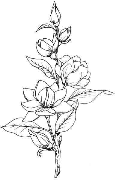 25 Beautiful Flower Drawing Ideas Inspiration