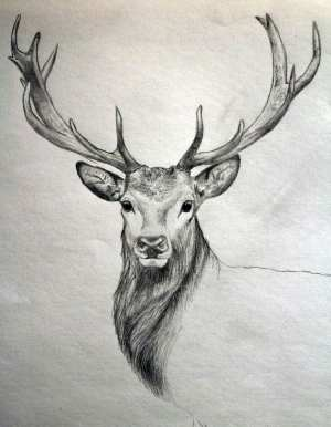 animal easy drawing sketch found inspiration