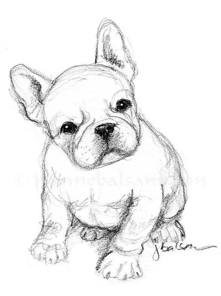 40 Free Easy Animal Sketch Drawing Information Ideas Brighter Craft